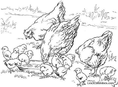 chicken sandwich coloring page buzz coloring dessin poule rousse