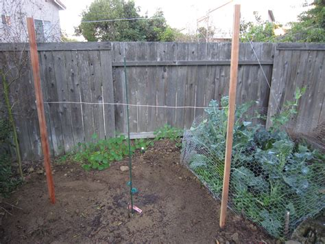 how to build a trellis how to build grapevine trellis bountiful backyard