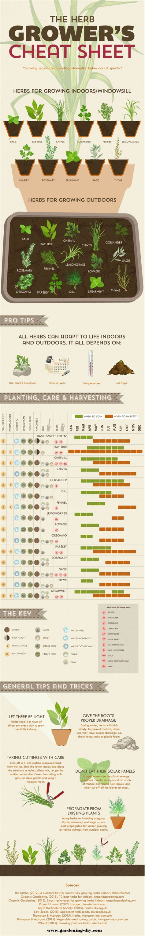 herb grower s cheat sheet 17 best images about herbs on pinterest gardens lungs