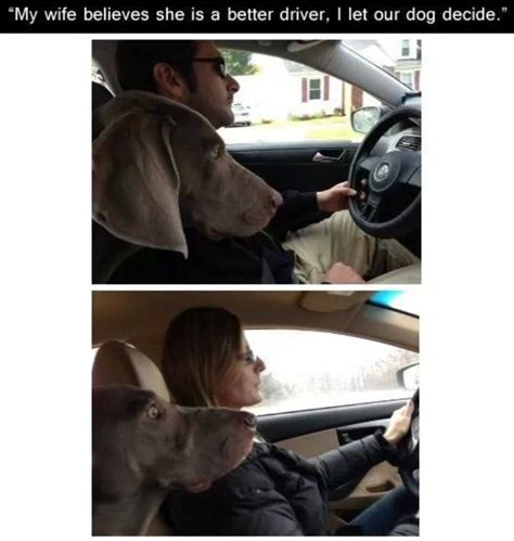Funny Memes About Driving - funny dog meme driving jokes memes pictures