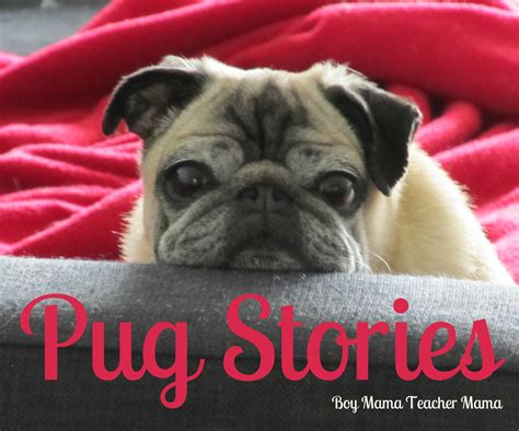 pug stories pug stories stories about pugs boy