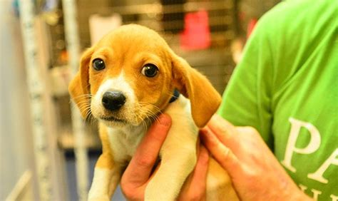 maricopa county shelter maricopa county animal shelter to introduce for surrendering animals