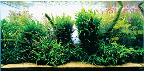 Style Aquascape by Nature Aquariums And Aquascaping Inspiration