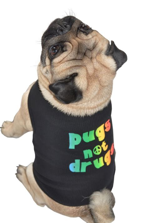 pug tops pug tank top that says quot pugs not drugs quot in black pug buzzpug buzz