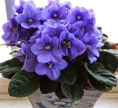 Imagenes De Flores Llamadas Violetas | violetas mandarsaludos com