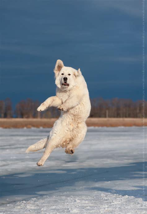 jumping puppy jumping animals photos