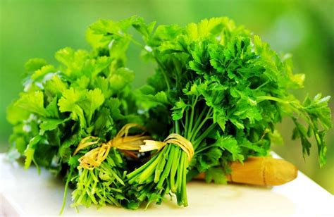 Cilantro And Chlorella Detox Recipe by Cilantro And Chlorella Can Remove Heavy Metals Your