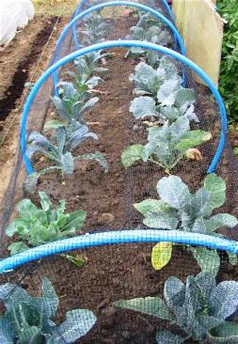 natural pest control remedies organic solutions
