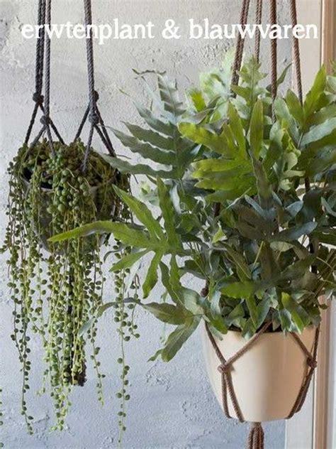 hang planten bloemen buiten de 7 hipste hangplanten als blikvanger thuis of op kantoor