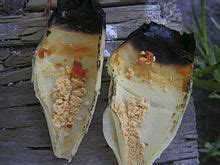Ear Wax Candles For Ear Infection by Ear Candling
