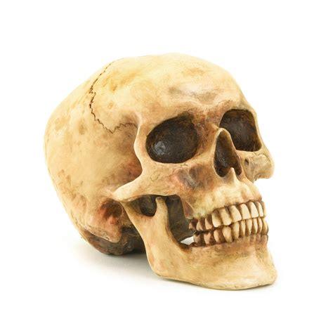 Wholesale Grinning Skull Buy Wholesale Halloween Decor Skull On
