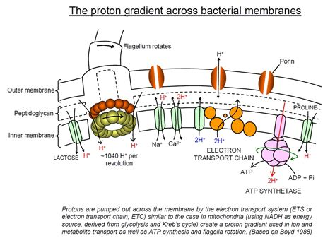 bacterial power systems