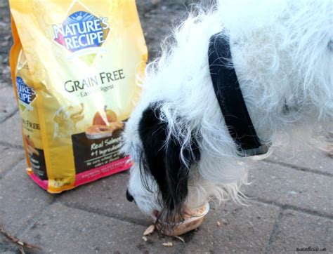 can you bring dogs into walmart diy and frozen treat block with nature s recipe