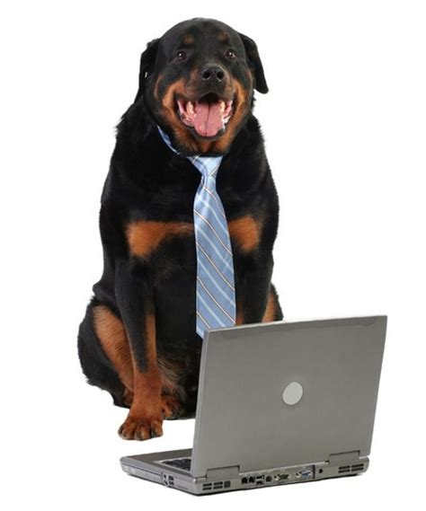 how to working dogs bring your to work doggies