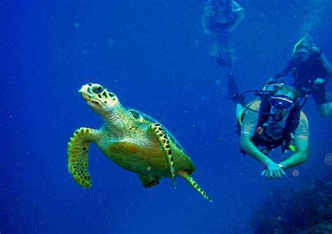 dive sea scuba diving diver sea underwater turtle wallpaper
