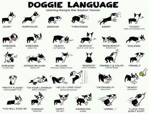 puppy language bark bark here s how you should be saying quot i you quot in language