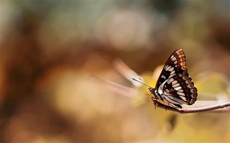 hd photography wallpaper butterfly insect on branch photography hd wallpaper new