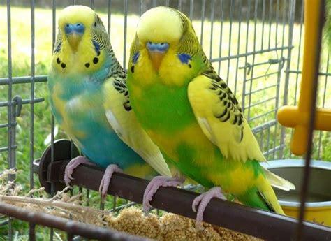 animali piccoli da tenere in casa pappagalli in criceti out il mercato dei piccoli