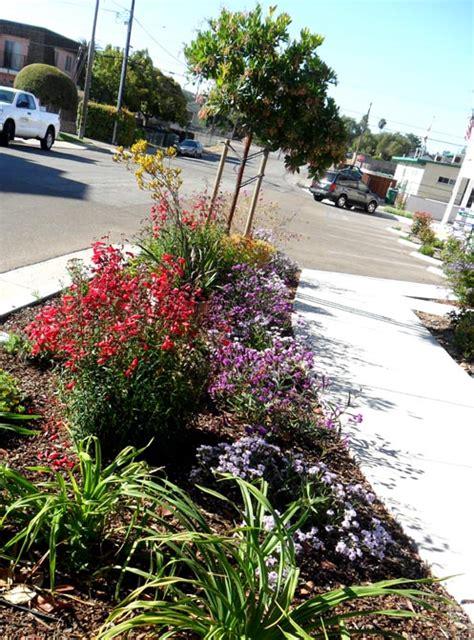 Morning Sun Rabbit Food Alfalfa Grass garden stuff etc guest contributors lawn garden rehab