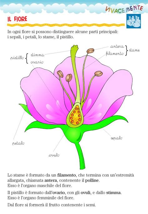 pistillo fiore 17 migliori immagini su scienze su cicli di