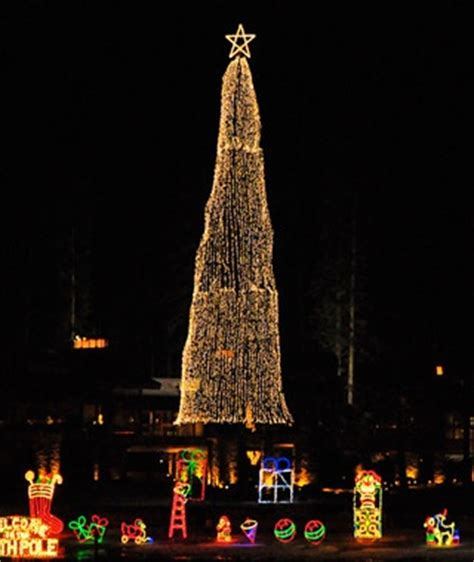 the tree at coeur d alene resort idaho america s tallest trees travel leisure