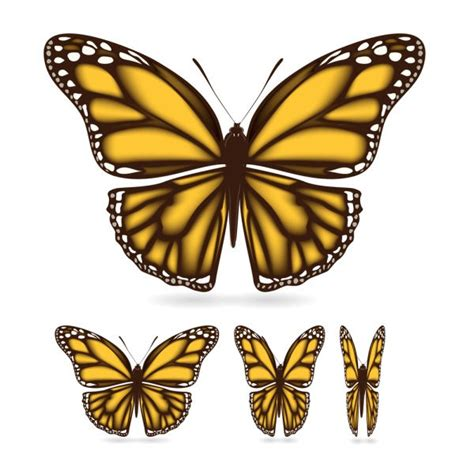 butterfly wing design www imgkid com the image kid has it