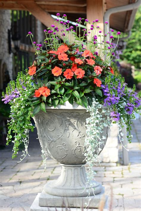 Planter Mix by 36 Best Images About Mixed Planter Ideas On