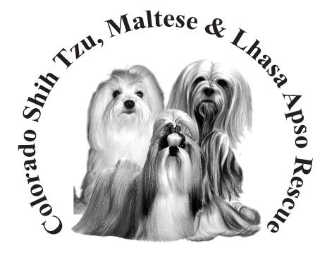 shih tzu rescue glasgow hale pet door maltese rescue organizations