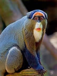 monkey with colorful 50 colorful animals photography inspiration photos