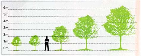 fruit tree spacing chart fact file fruit rees rootstock information and guide