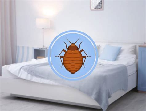 can bed bugs live in water do pressure washing companies use your water rings