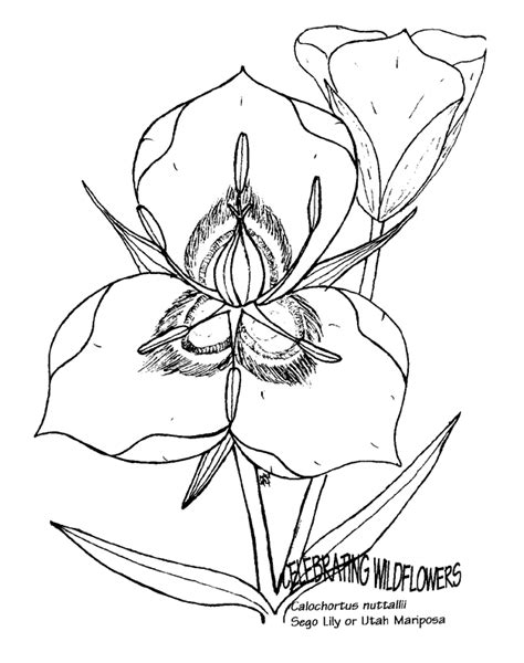 coloring pages utah utah coloring pages