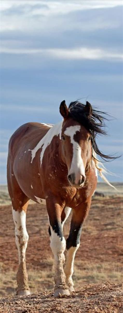 horses mustangs 25 best ideas about mustang horses on pretty