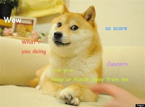 doge the shiba inu dog meme owns the internet pictures gifs