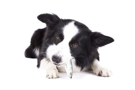 best fish for dogs 11 best superfoods for dogs that may improve their health