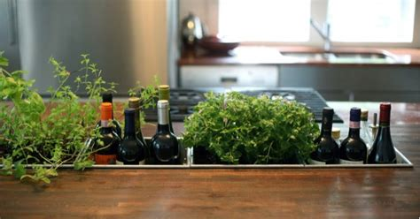 kitchen herb kitchen herb gardens and salad walls my home rocks
