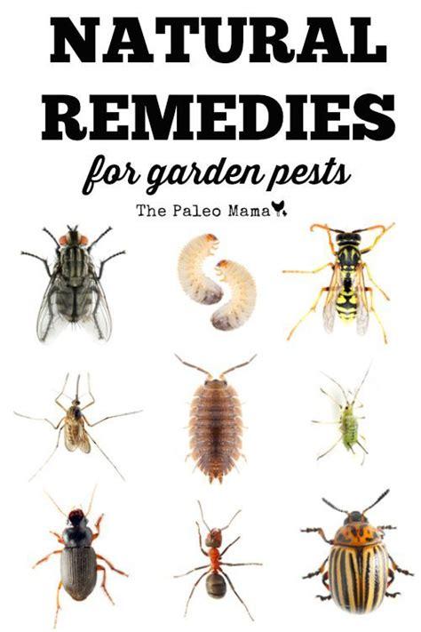 natural remedies  garden pests natural remedies