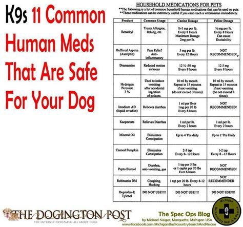 medicine safe for dogs human medicines safe for dogs pet health