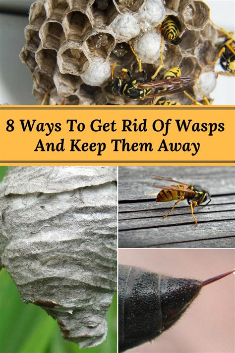 how to keep wasps away from house 8 ways to get rid of wasps and keep them from returning