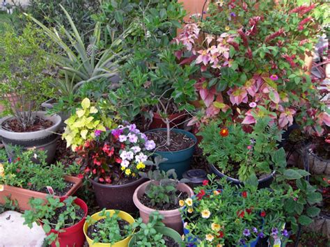 container gardens for florida gardening in south florida june 2011