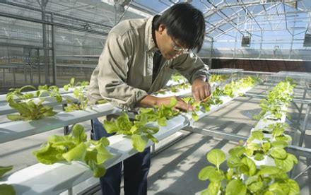 menanam cara hidroponik cara menanam hidroponik dengan investasi murah harusketemu