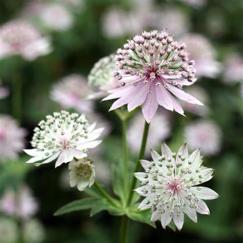 Fleurs Qui Resistent Au Vent by Plante D Ombre Liste Ooreka