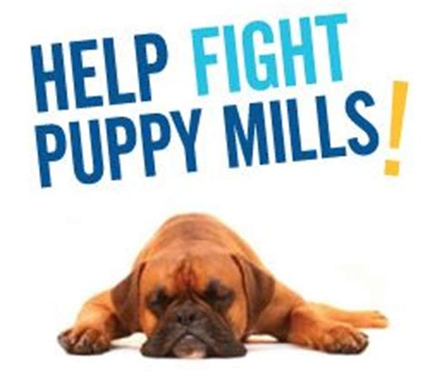 facts about puppy mills facts about puppy mills how to stop them aussiedoodle and labradoodle puppies