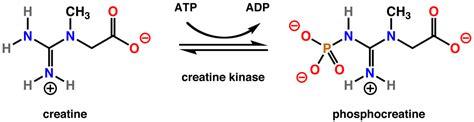 creatine kinase low pathology outlines creatine kinase
