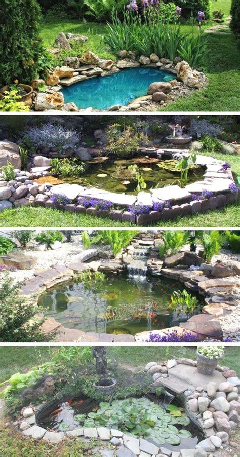 garden plants watergardening ponds backyard water