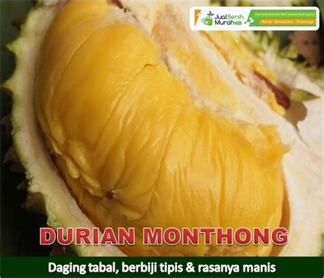 Pupuk Tanaman Goldstar durian monthong jualbenihmurah