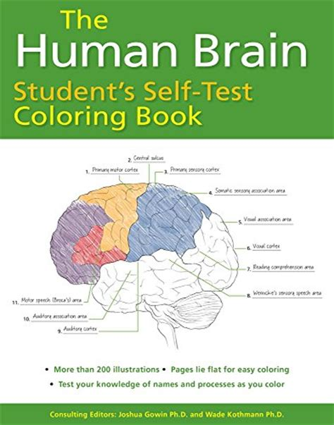 barron s anatomy coloring book the human brain student s self test coloring book