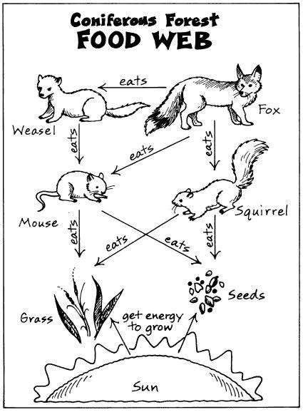 W Is For Web Coloring Page by Food Chain Clipart Black And White Clipground