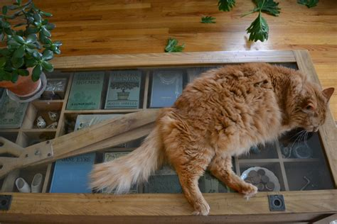 constantly satisfying a cat s curiosity catable by ruan cat table a fat cat sleeping on a table wallpapers and images