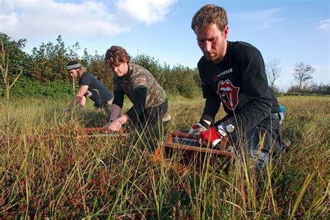 wilde bloemen terschelling groenhof ambachtelijke cranberry producten terschelling